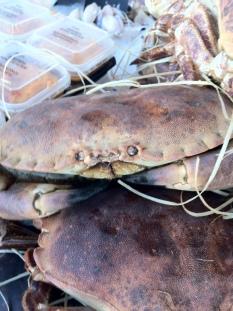 Crab Rennes